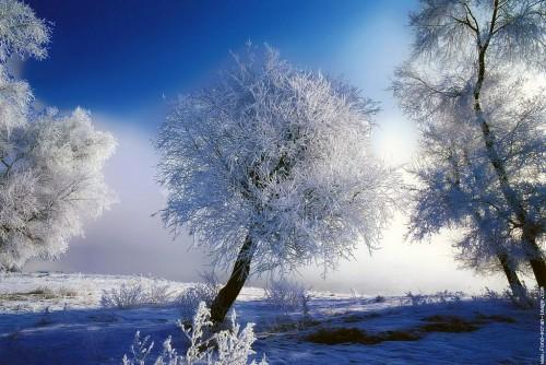 arbre-en-neige.jpg